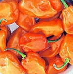Peppers - Hot Habanero Orange